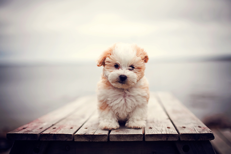 cute1