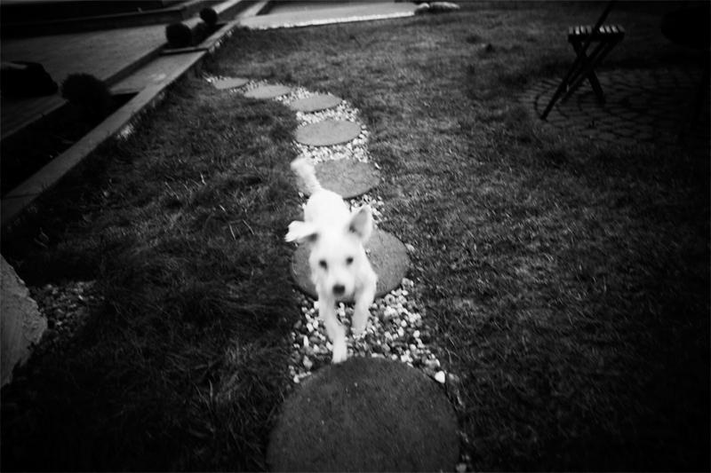 doggg